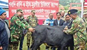 Army organises free veterinary campaigns