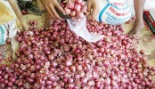 Onion prices start to fall again in Dhaka kitchen markets