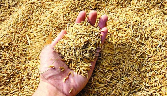 Govt working to ensure food security