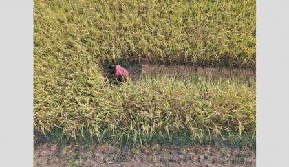 Country's agri sector shrinking