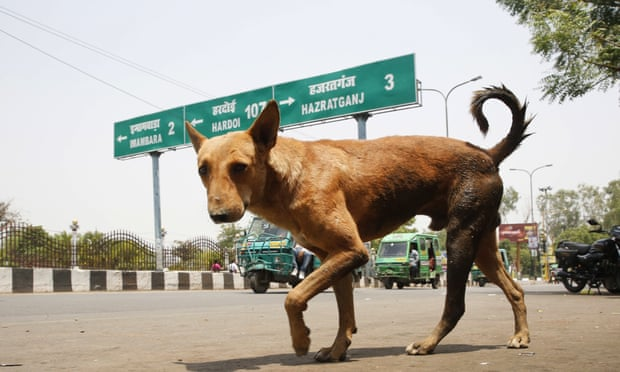Baby mauled to death by dogs in Indian hospital's operation theatre
