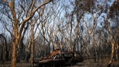 Relief as rain falls over Autralian bushfires