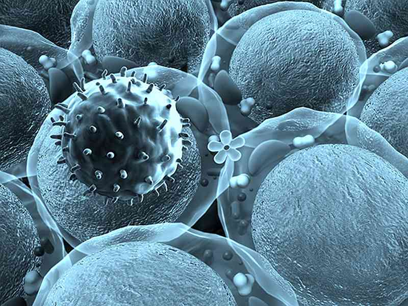 Scientists find powerhouses that fight tumours from within