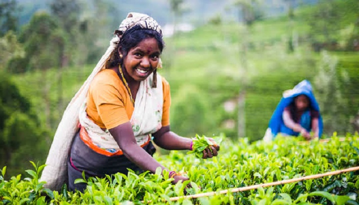 Sri Lanka to increase wages for tea estate workers