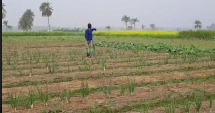 The curious case of onion 'lifting' in Satkhira