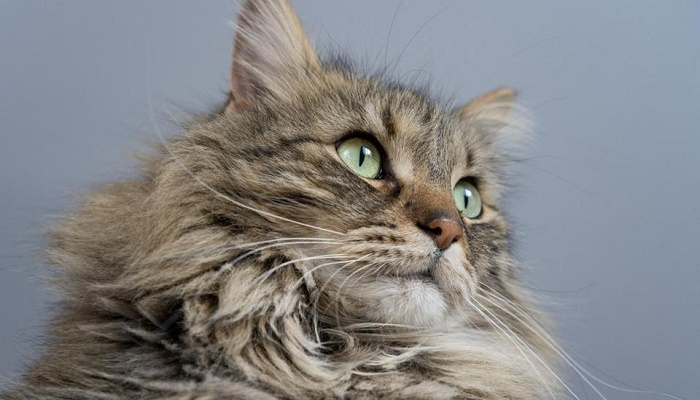 London couple spend over 18 lacs in court battle with neighbour over pet cat
