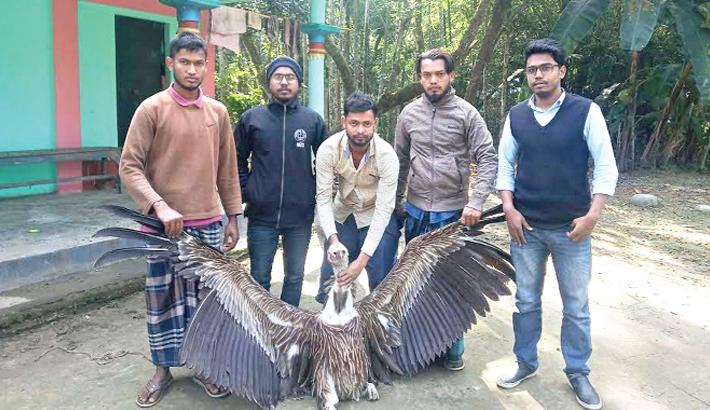 Pradhikar, an organisation rescue a rare Bengal Vulture