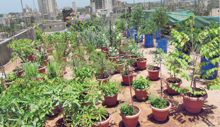 'Rooftop gardening can tame Dhaka's rising temperature'