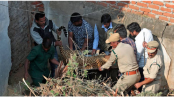 Leopard runs into house before being captured in south India