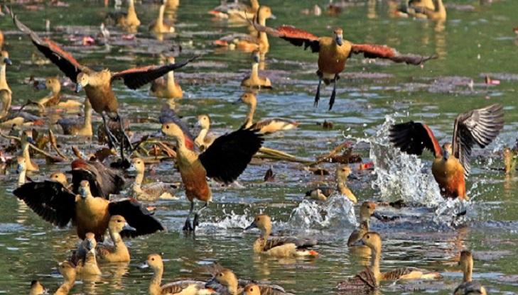Bird fair at Jahangirnagar University on Jan 24