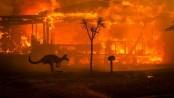 Australia evacuates parts of its capital as bushfire conditions return