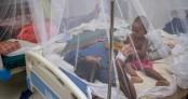 4 new dengue patients detected in last 24hr: DGHS