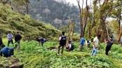 RAB destroys poppy fields in Bandarban