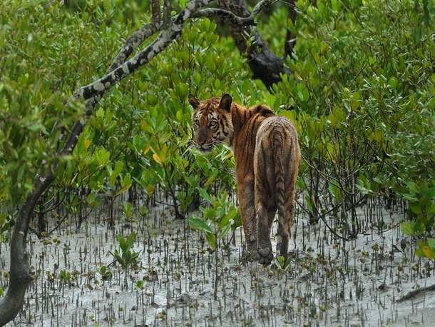 US envoy visits Sundarbans to promote wildlife, conservation