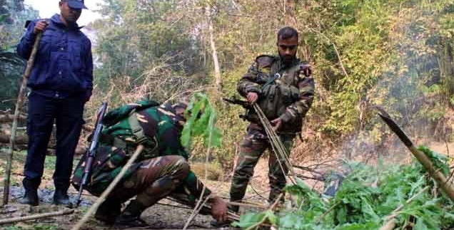 Poppy field found again in Bandarban, one held