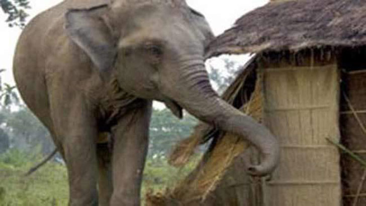 Housewife killed in wild elephant attack in Bandarban