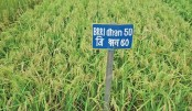 Premium quality aromatic rice to be exported