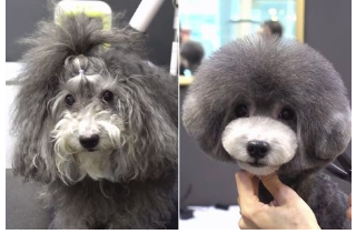 Dog that 'looks like Hagrid' goes to groomer - is unrecognisable when she's done