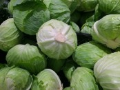Cabbage compound helps fight fatty liver