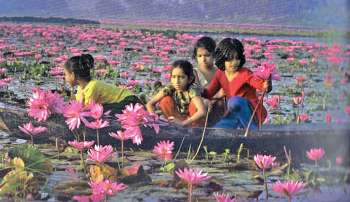 Beauty of Barishal Beel Covered by Red Water Lily