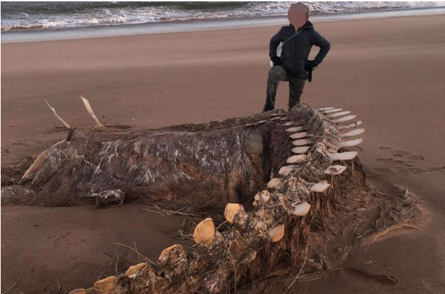 Gigantic mystery 'skeleton' found washed up on beach by Storm