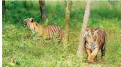 'Sundarbans Day' observed