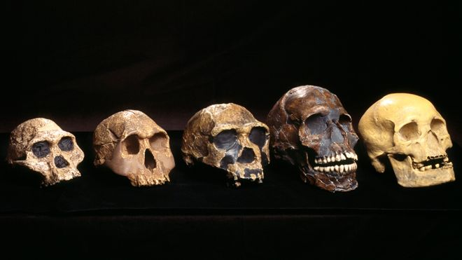 'Ghost' human ancestor discovered in West Africa