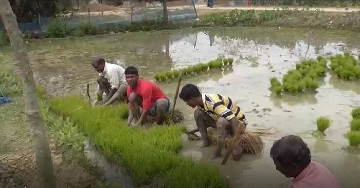 Chapainawabganj boro farmers fear low paddy prices