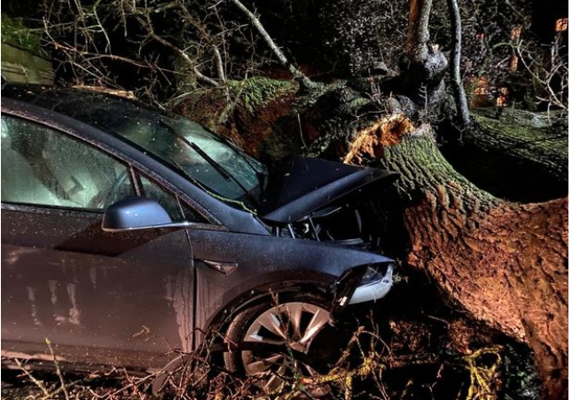 Tesla Autopilot saves family's lives after tree crushes car in Storm Dennis