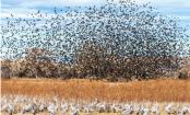 Radar captures huge bird migration over Florida