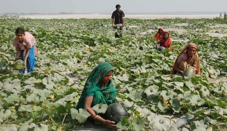 Pesticide-free vegetable farming becomes popular in char areas
