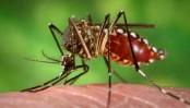 Dengue haunts Dhakaites