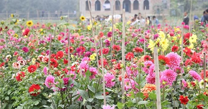 Narayanganj florists bask in supply glut, eye Tk20 cr sale