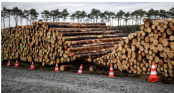 German court says Tesla can fell trees at site of new plant