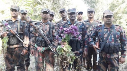 BGB destroys poppy fields in Bandarban