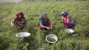 Jamalpur farmers break clutches of middlemen