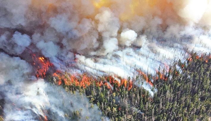 Bushfires burned a fifth of Australia's forest: study