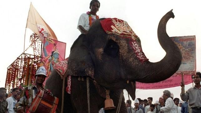 Dhaka zoo calls time on elephant rides