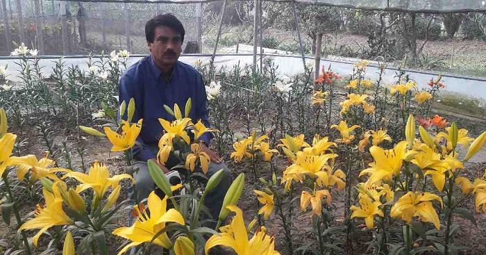 Lilium blooms in Gazipur; Bari's effort shows success