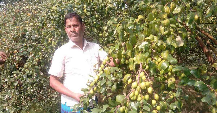 Jujube: the small fruit yielding big profits for Satkhira farmers