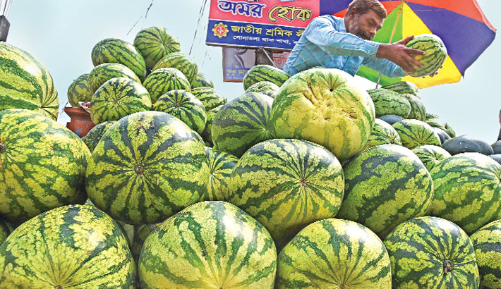 Trader putting on display early harvested watermelon