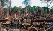 Deforestation as a major threat
