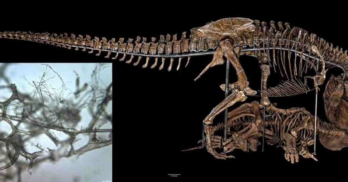 Scientists find possible evidence of chromosomes, DNA preserved in dinosaur fossils