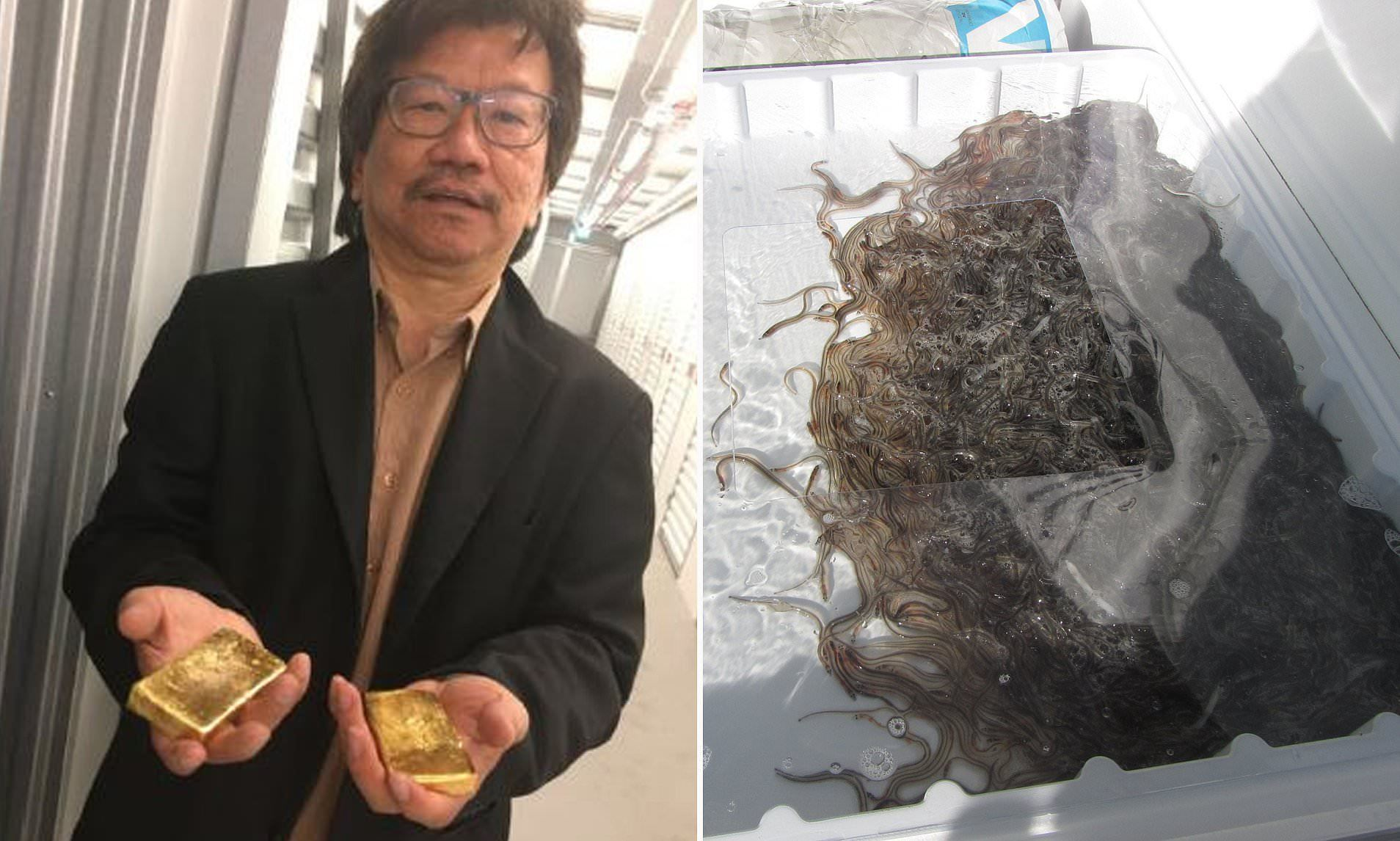 Seafood salesman smuggled £53m worth of live eels out of UK