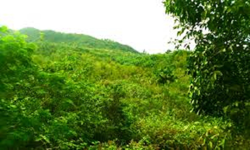 Value of Forest and Biodiversity