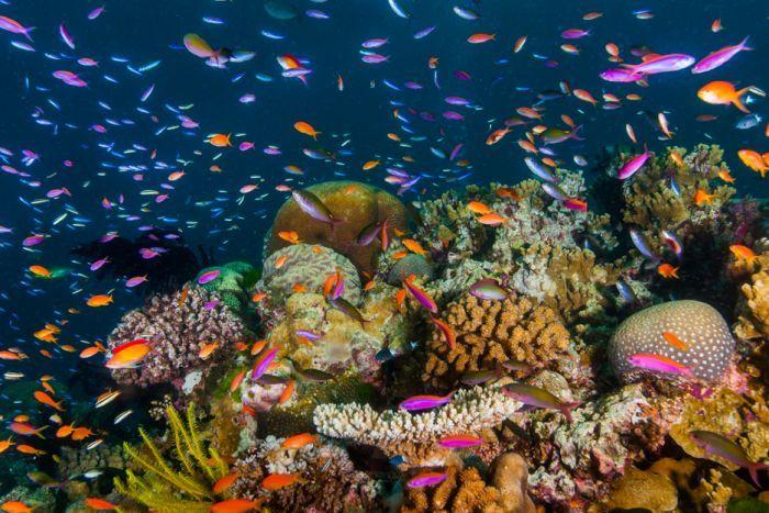Great Barrier Reef suffers third mass bleaching
