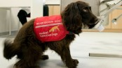 Dogs to be trained to detect coronavirus