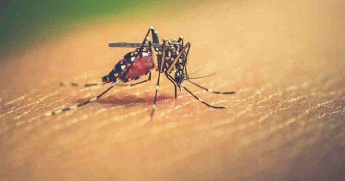 One new dengue patient in last 24 hrs: DGHS