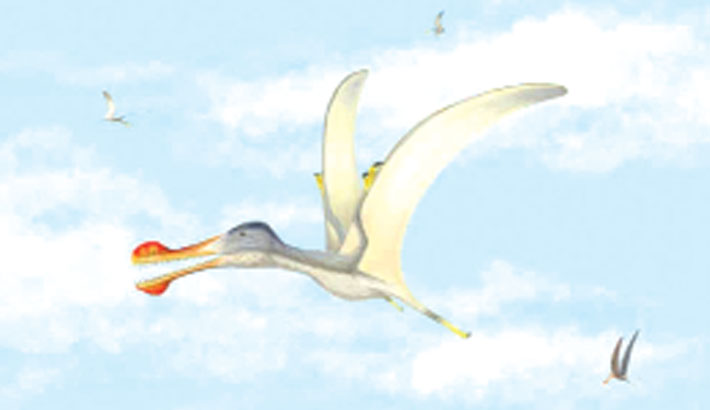 Three new species of pterosaur discovered