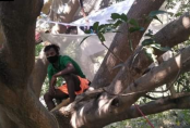 Migrant workers self-isolate up a tree